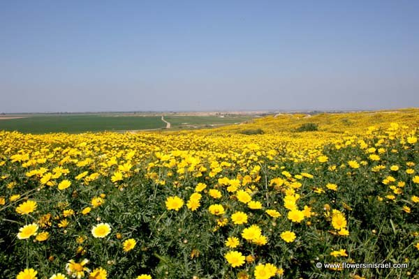 eshkol national park